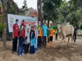Semarak  Kurban SDIT Luqman Al Hakim Yogyakarta